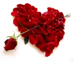 Rose Heart (4)